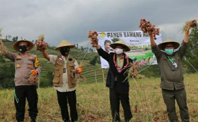 Mentan SYL Panen Bawang Merah di Bantaeng