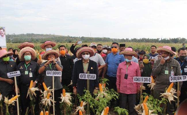 Mentan SYL Panen Jagung di Jeneponto, Produksi Terus Ditingkatkan