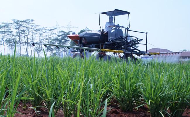 Investasi Sektor Pertanian Melalui PMDN Kian Meningkat