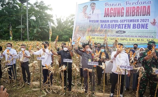 Mentan SYL Panen Jagung di Bone: Tingkatkan Produktivitas dan Kesejahteraan Petani