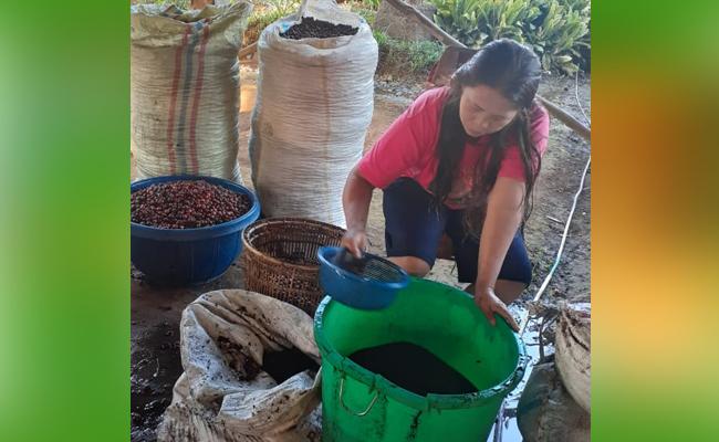 Menakar Praktik Sistem Wanatani (Agroforestry) Kopi