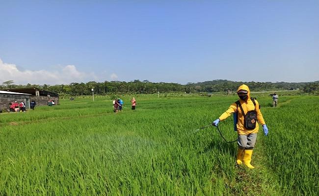 UGM: Kenaikan NTP Merupakan Angin Segar Terhadap Optimisme Baru Sektor Pertanian
