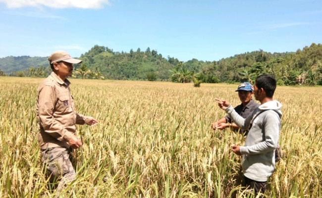Kementan Prioritaskan Peningkatan Sapras Penyuluh Pertanian