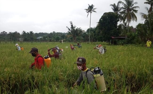 Produksi Pangan Indonesia Cukup Kuat dan terkendali