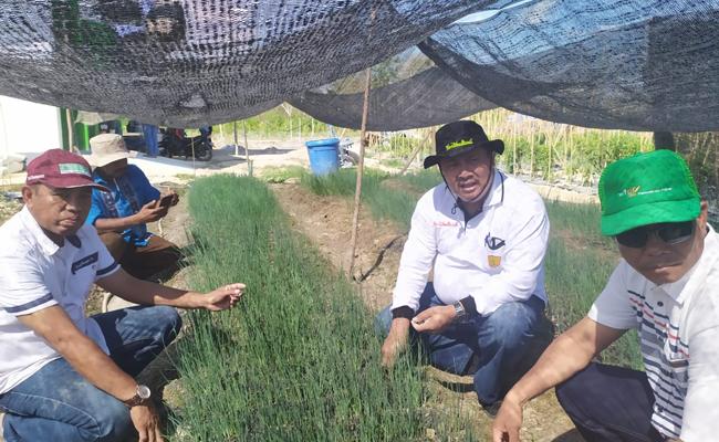 Kementan-Sultra Kerja Sama Jadikan Konsel Lumbung Komoditi Hortikultura