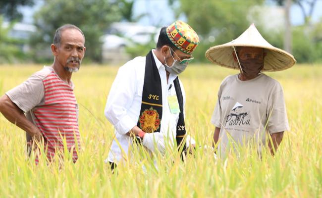 Mentan SYL  Panen Padi Di Aceh Besar