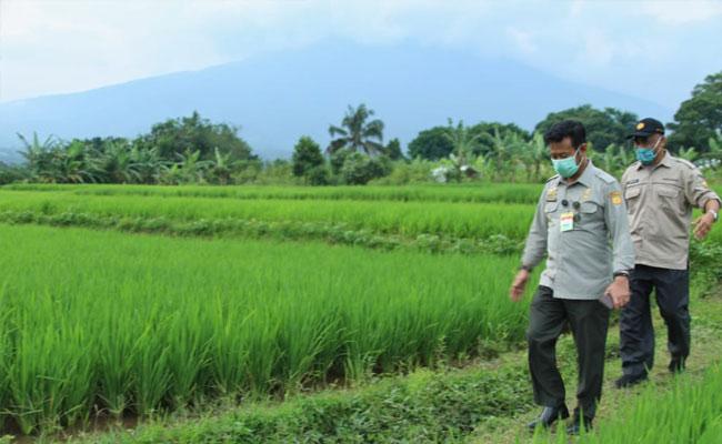 Tingkatkan Produksi Padi, Kementan Kenalkan Konsep IP400 dan Integrated Farming